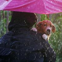 owner carrying pet under umbrella in the rain